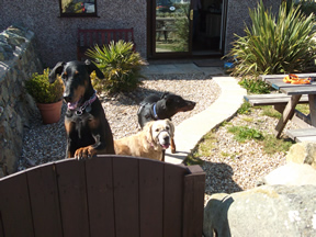 Roxy, Ellie & Beau Anglesey